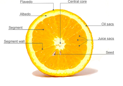 Inside an Orange